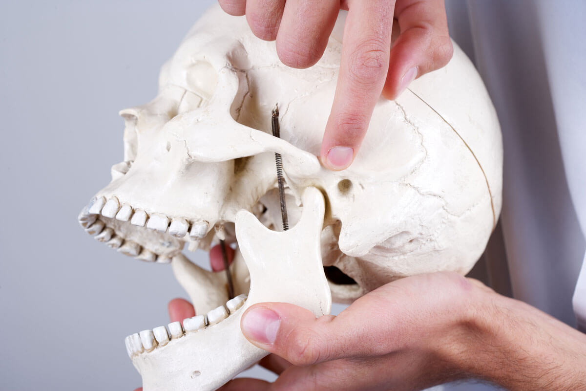 Pointing to the temporomandibular joint (TMJ) on a model school